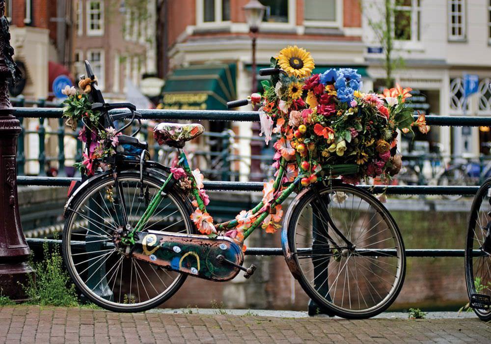 velosiped-v-cvetah.jpg