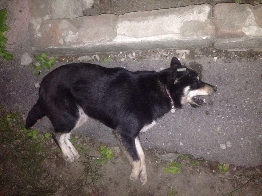 В Волгограде отравили собаку из программы «Гуманное соседство»