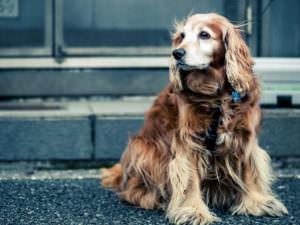 Тест: Отгадайте породы собак