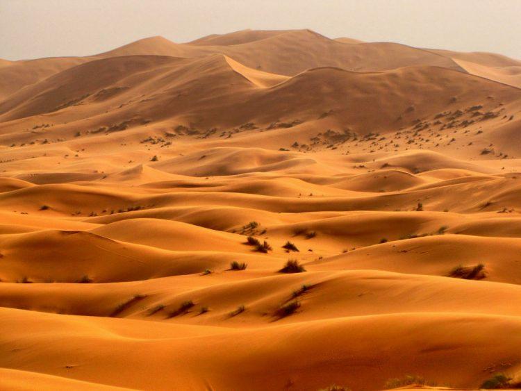 Изменение климата грозит превратить Украину в пустыню